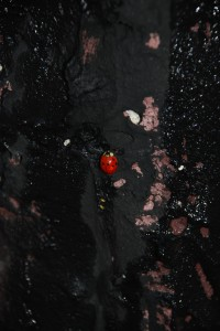 coccinella filippo biagioli calcestruzzo