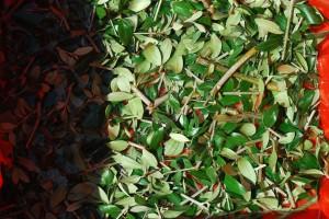 filippo biagioli european ritual art lavorazione acqua legno olivo ulivo