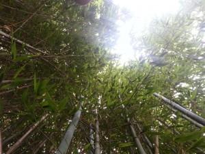 podere la fornace bamboo bambu serravalle pistoiese pse