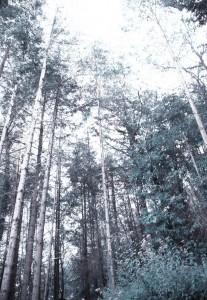 filippo biagioli fotografia esposta e pubblicata durante la mostra mediacaotica monsummano terme