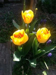 filippo biagioli tulipano giardino tribale serravalle pistoiese