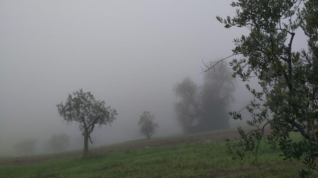 Nebbia Poggio alla Guardia
